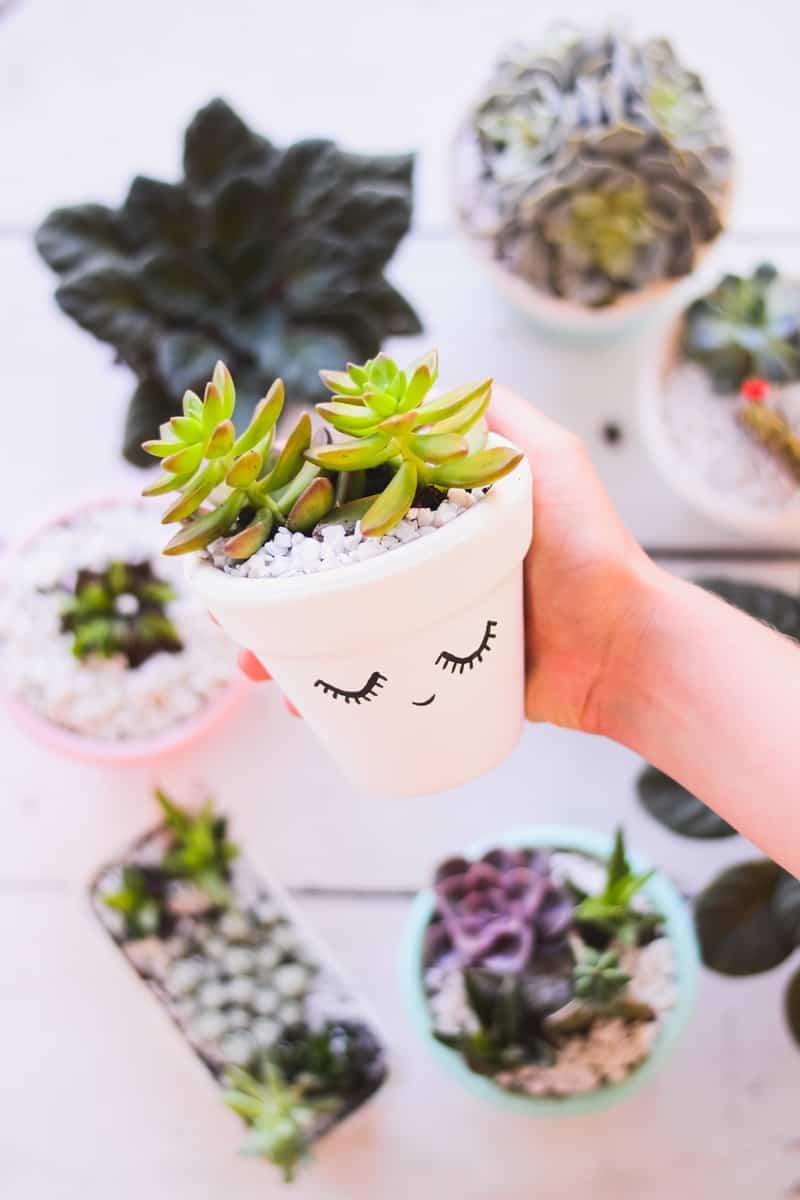 painted succulent pots