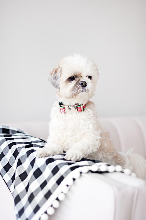 diy dog blanket